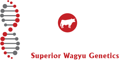 Absolute Wagyu Footer Logo